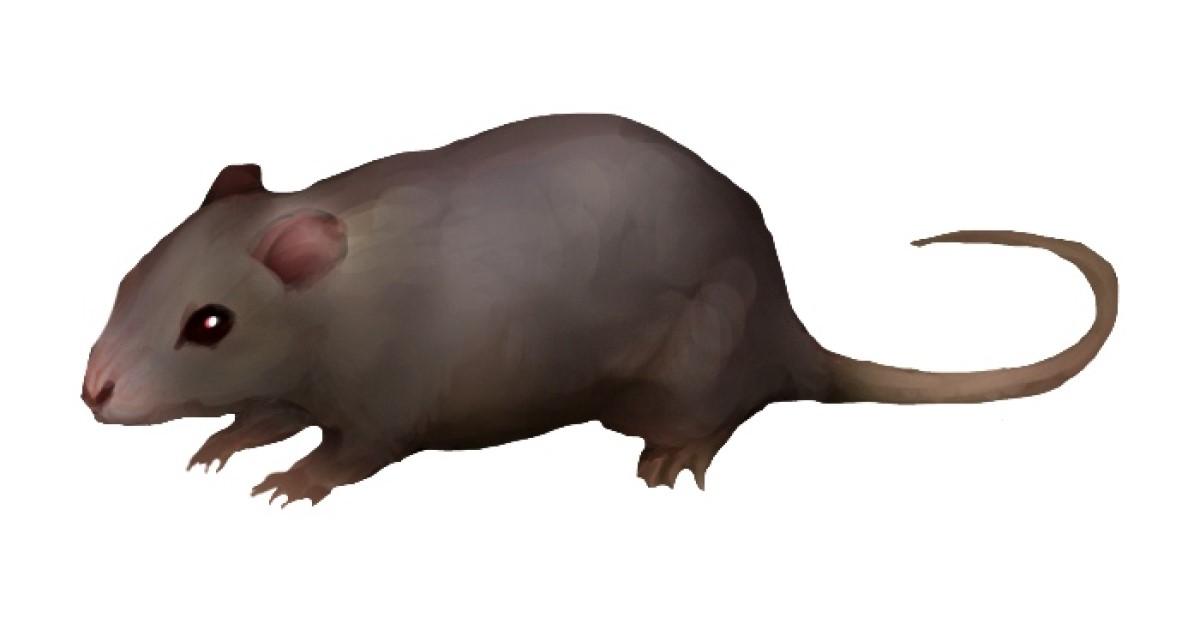 ドブネズミの生態を知って、効果的な駆除や対策方法を考えよう!